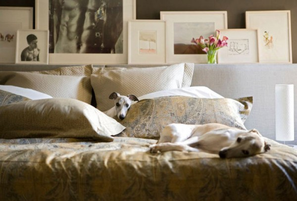 How to make your interiors more pet friendly