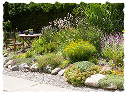 Xeriscaping – A sustainable landscape option